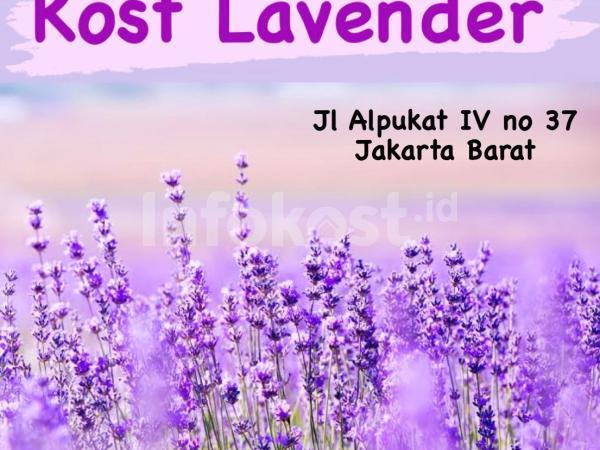 Kost Lavender